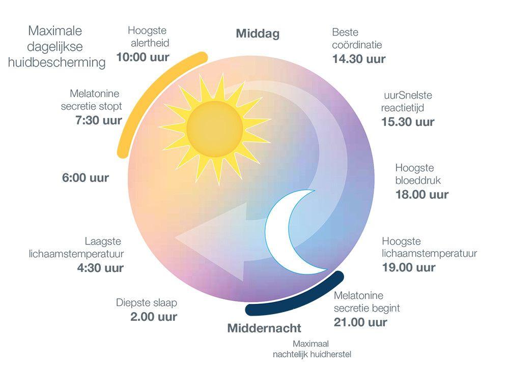 het circadiaanse ritme van de huid